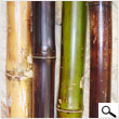 Varnished Bamboo 2In X 8Ft (pack 4 poles)