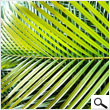 Small Palm Leaves for tropical decorations